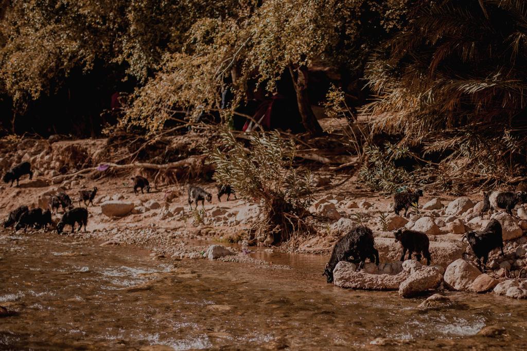 wąwóz Todra w Maroku