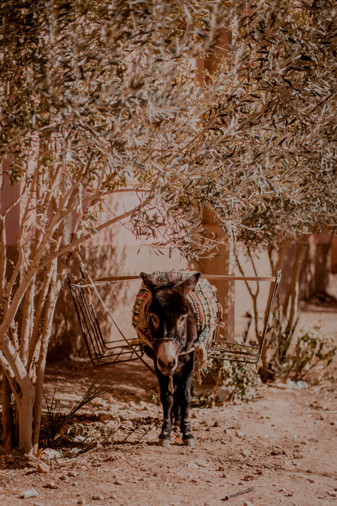 Todra Gorge Maroko