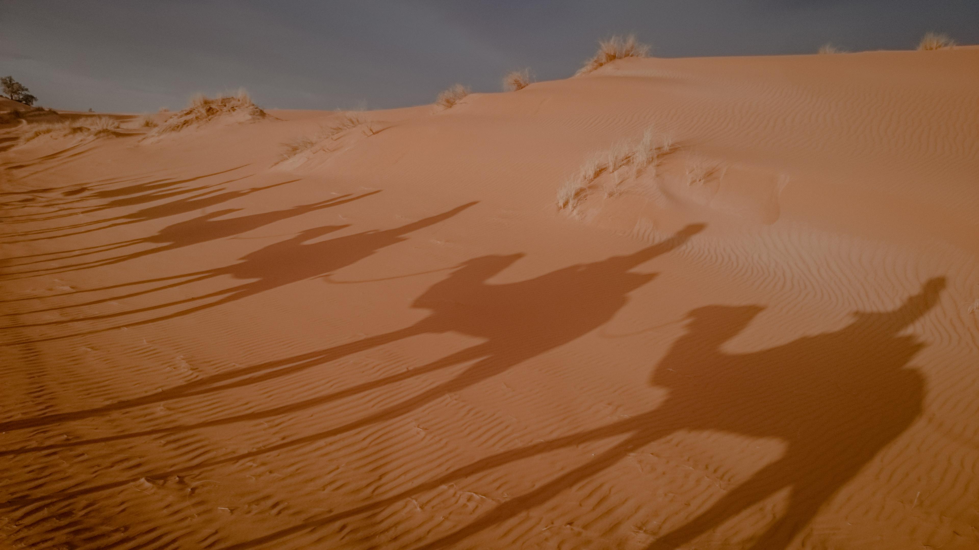Maroko - wycieczki na wielbłądach