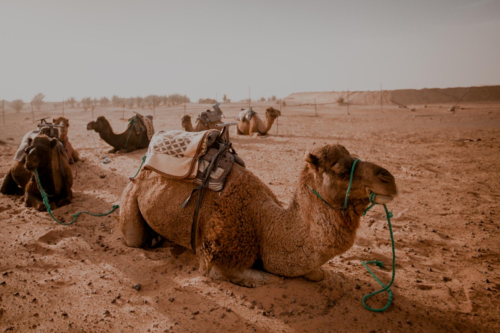 Maroko, wycieczki na pustynię Erg Chebbi