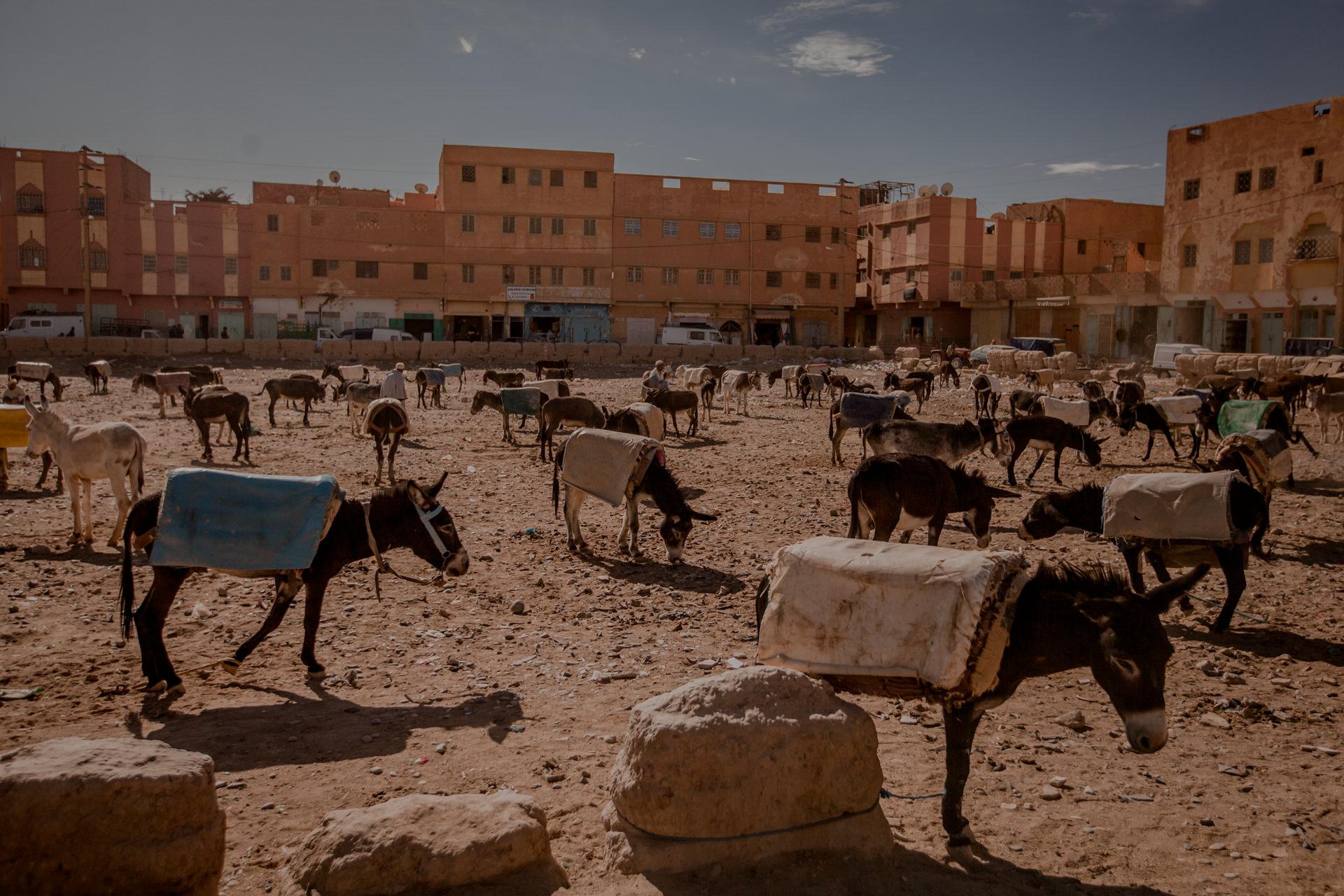 Maroko - atrakcje. Targ w Rissani