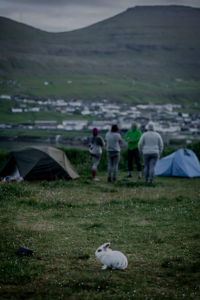 Wyspy Owcze - pola namiotowe