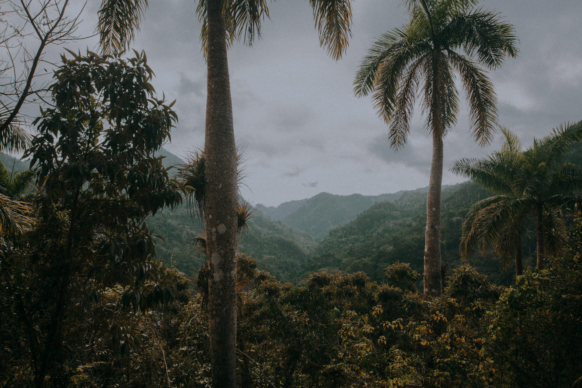 Kuba - Trinidad - dżungla