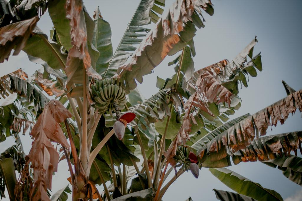 Trinidad - przyroda