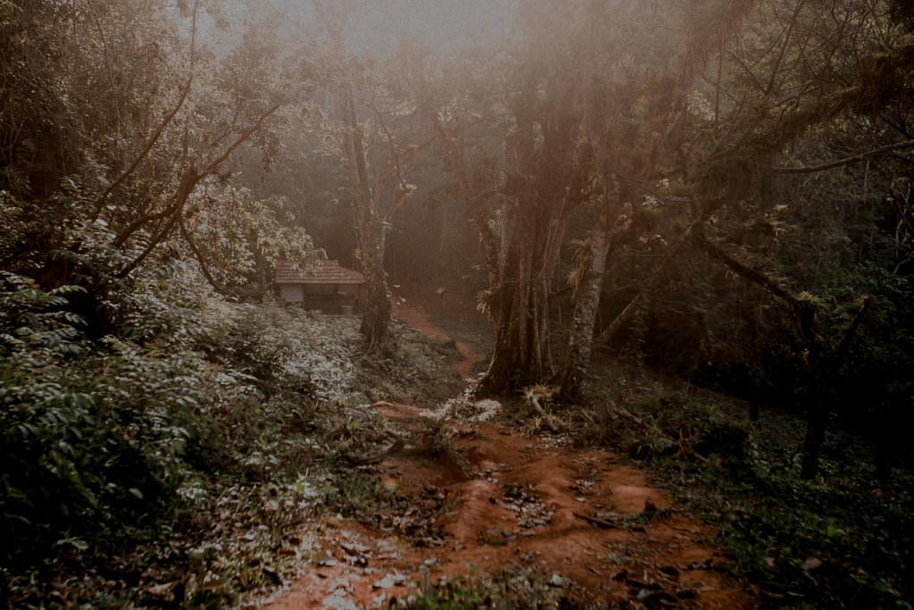 Trinidad dżungla