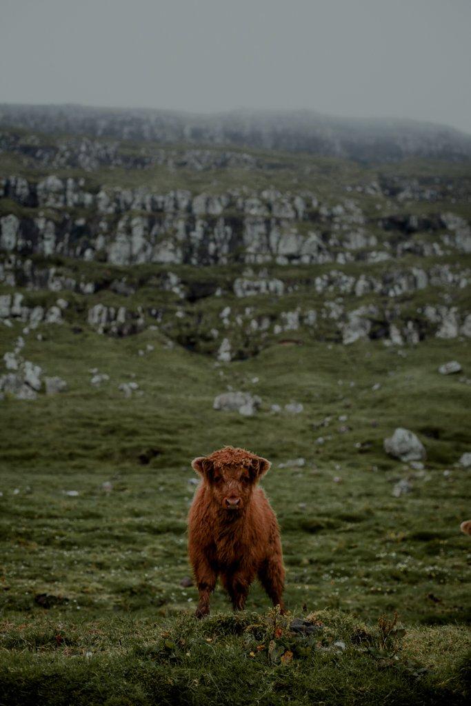Atrakcje Wyspy Owczych. Wyspa Nolsoy i miejscowości Kirkjubour oraz Torshavn