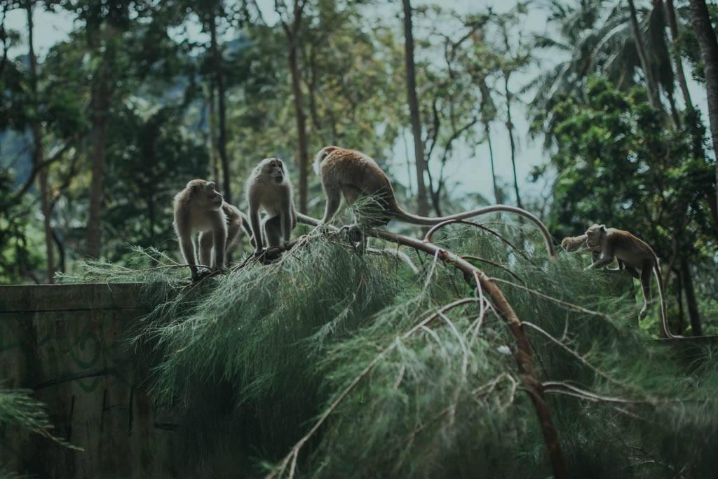 Makaki Railay, Tonsai, Krabi