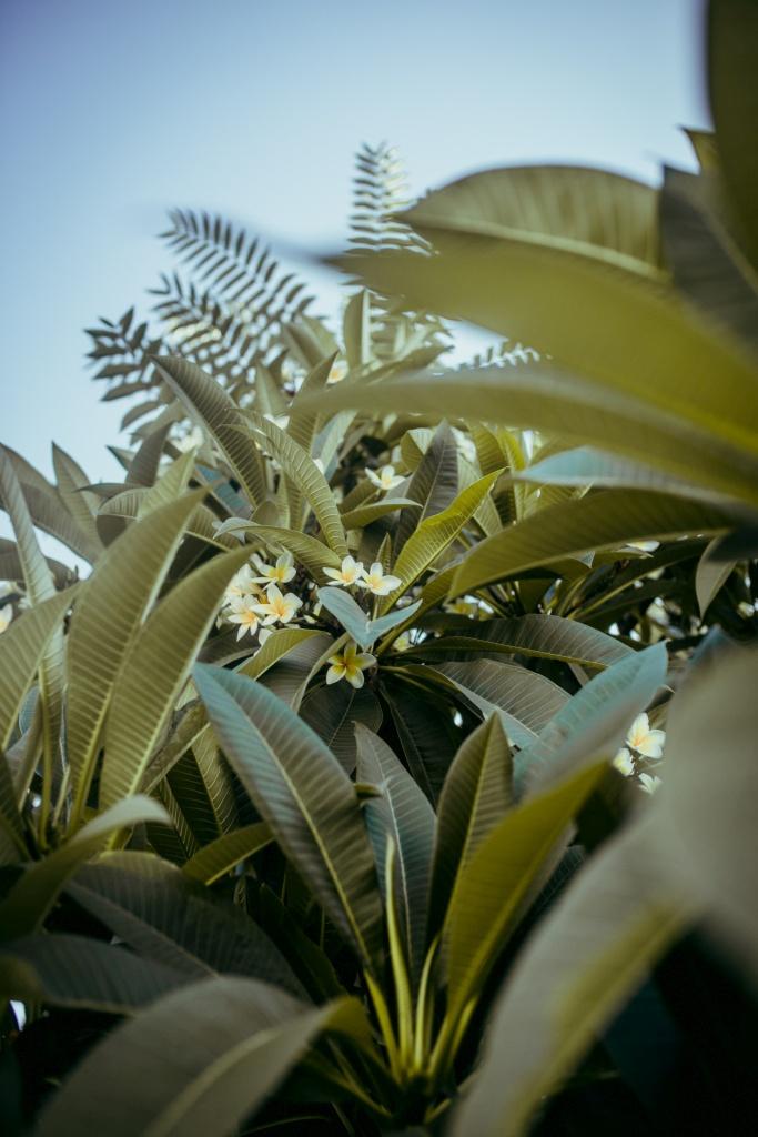 Rośliny w Chanii