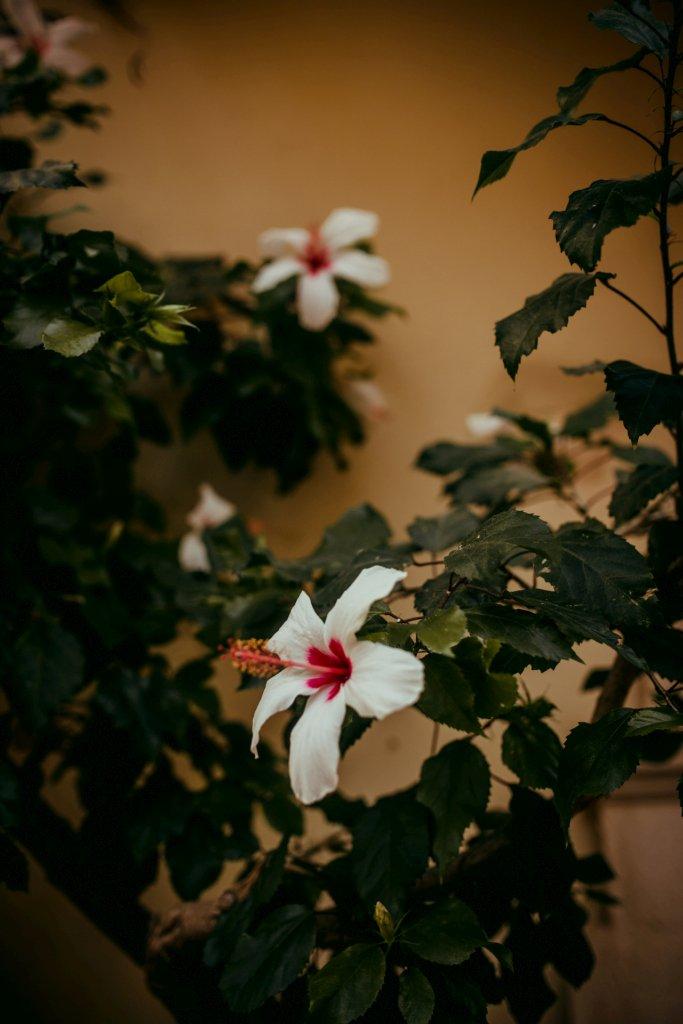 Chania - rośliny, wiosna