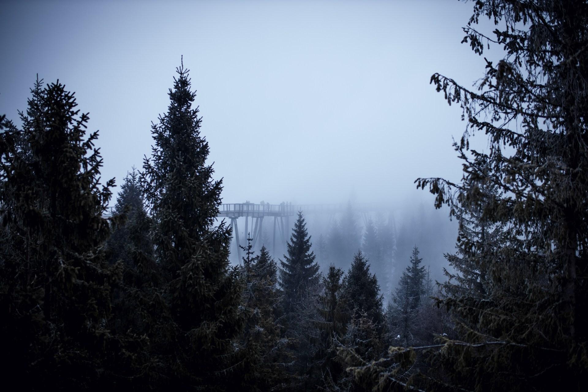 Ścieżka w koronach drzew na Słowacji
