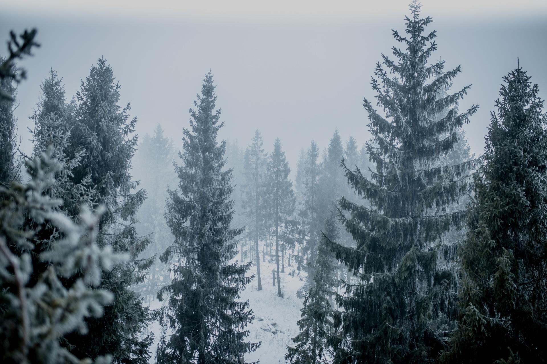 Ścieżka w koronach drzew Słowacja