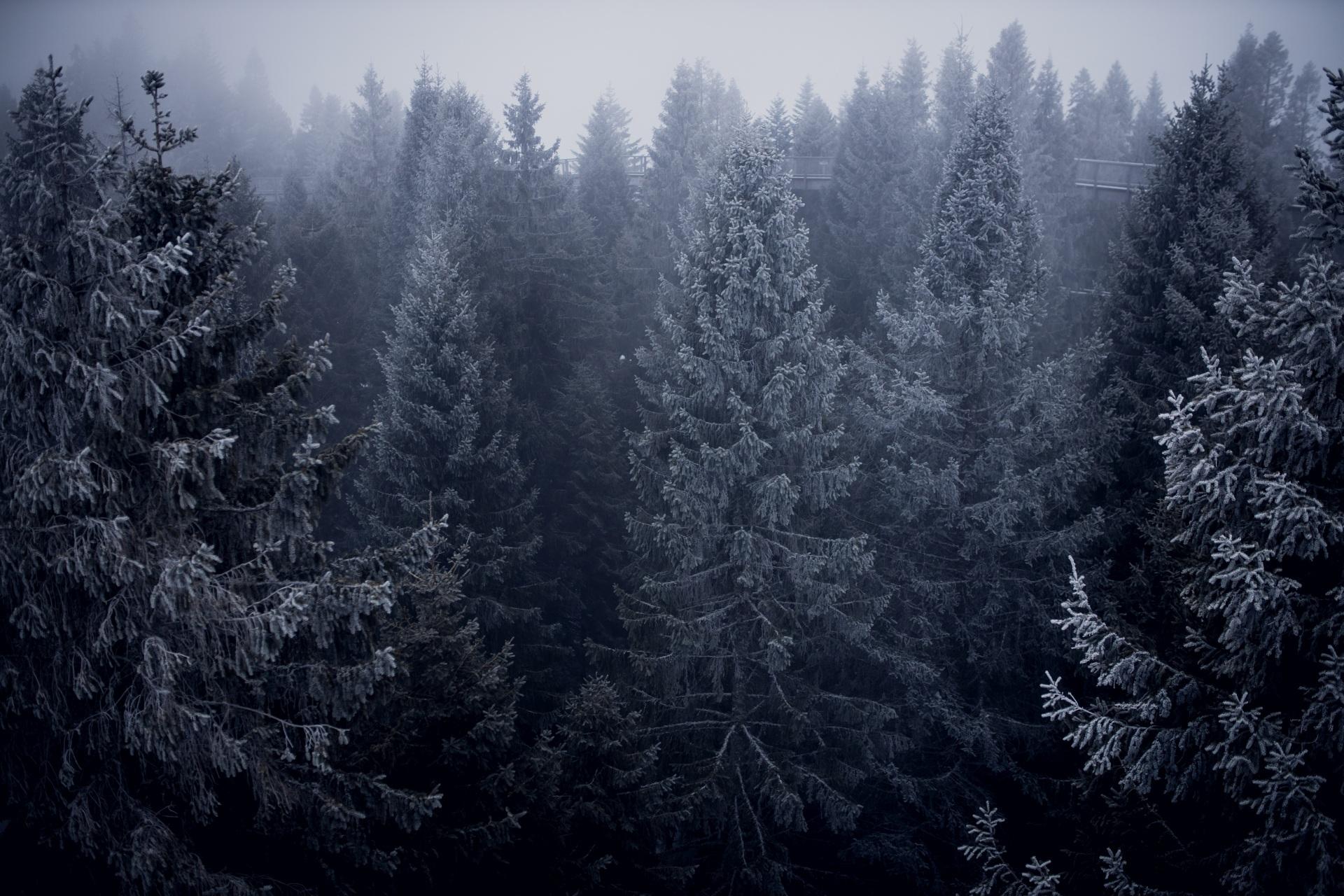 Chodnik koronami drzew