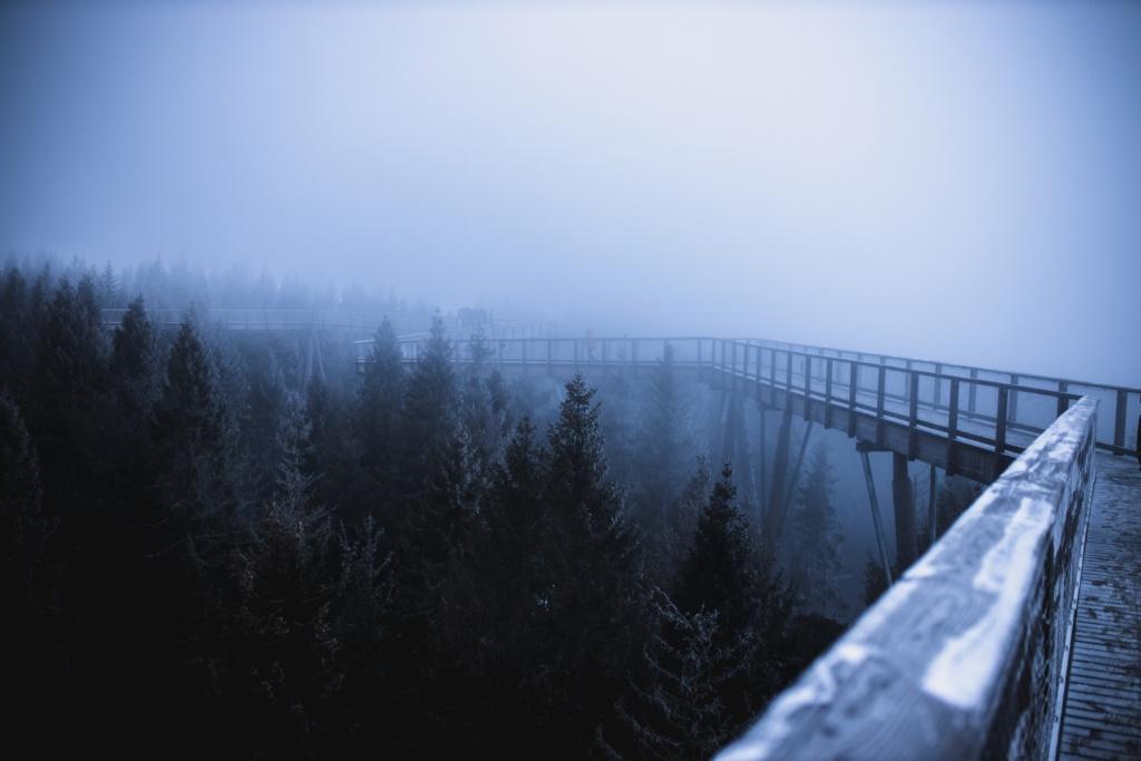 Ścieżka w koronach drzew zimą
