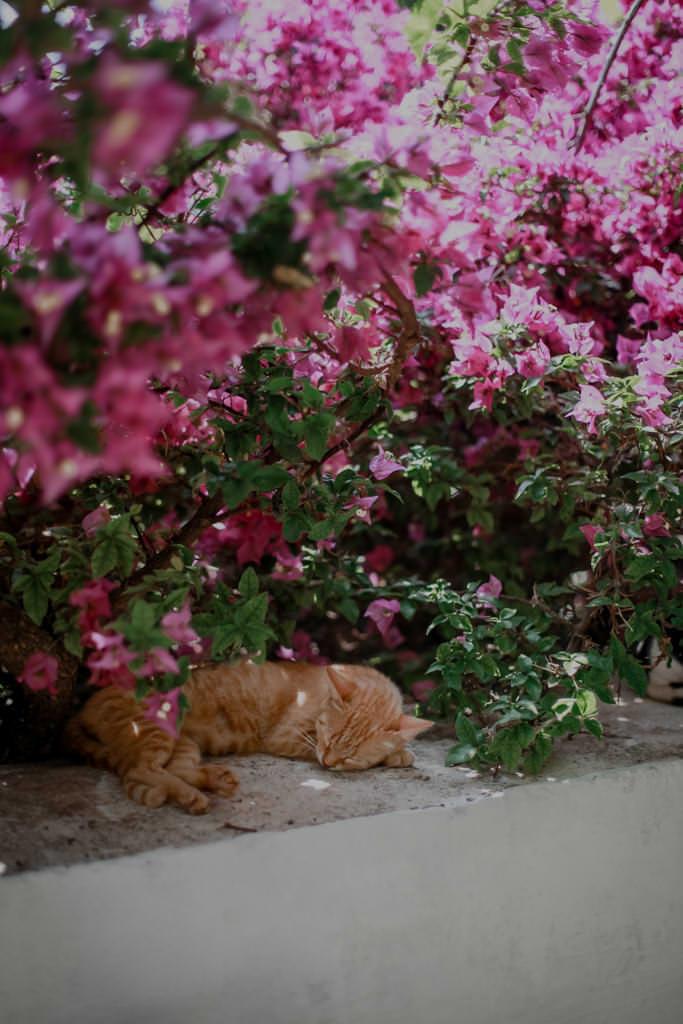 Kolorowe Korfu