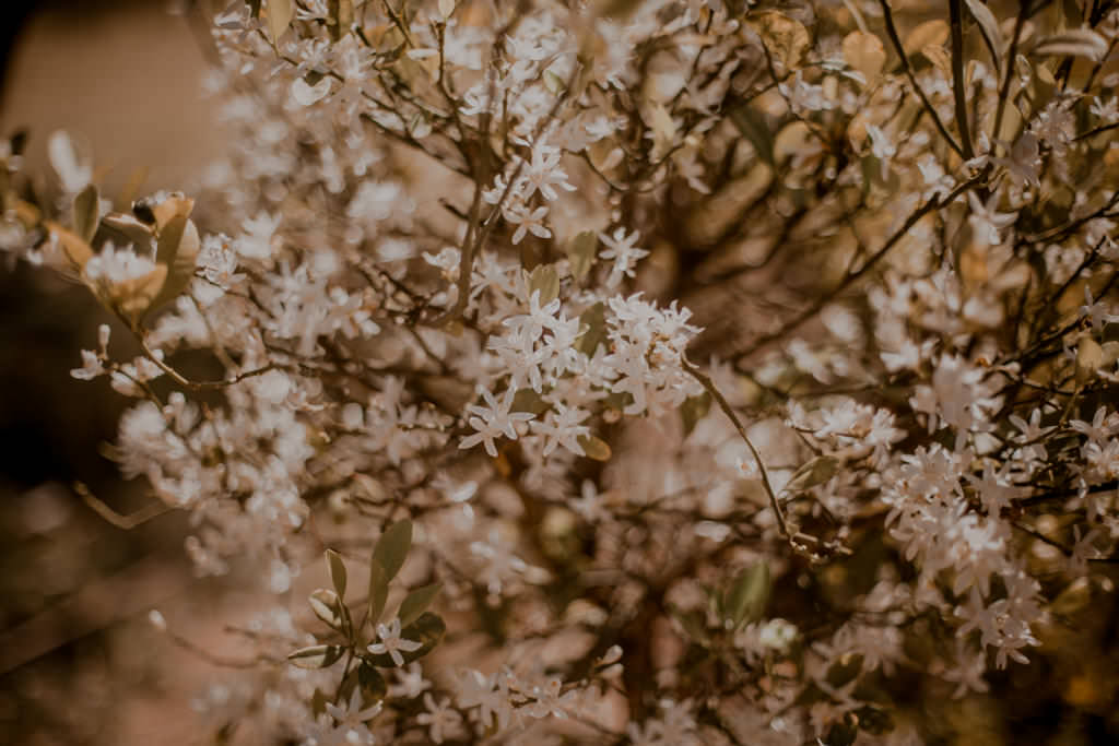 Kwiaty i słońce w Ejlacie nawet zimą