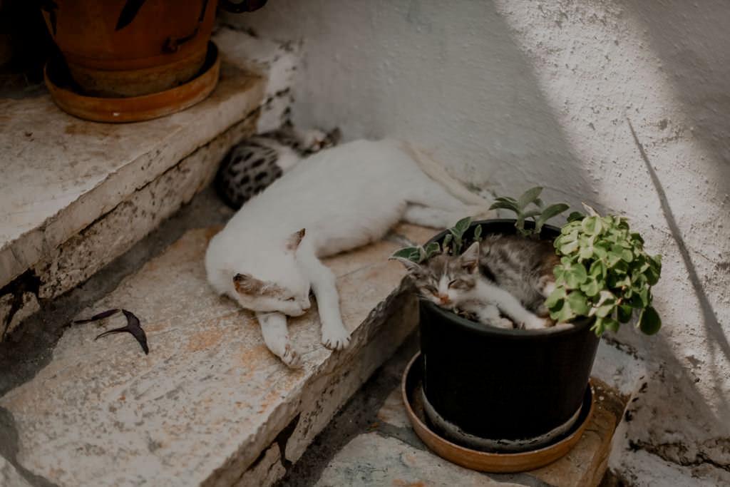 Koty na Korfu