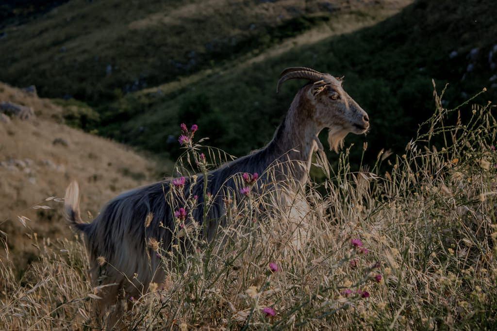 Atrakcje na Korfu. Góra Pantokrator