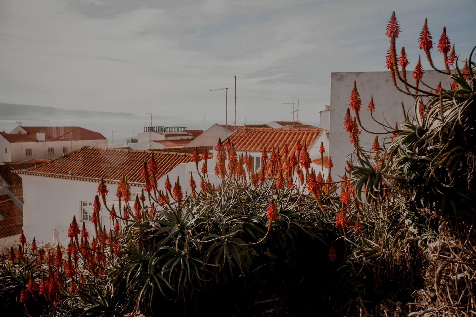 Cicha miejscowość na wakacje w Portugalii. Nazare i najlepsze plaże w Portugalii
